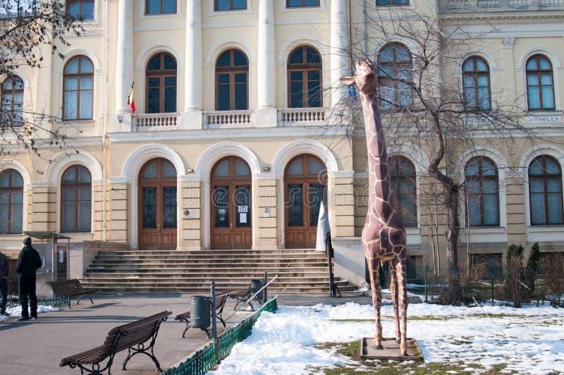 Museo natural rumano de la entrada de la historia imágenes de archivo libres de regalías