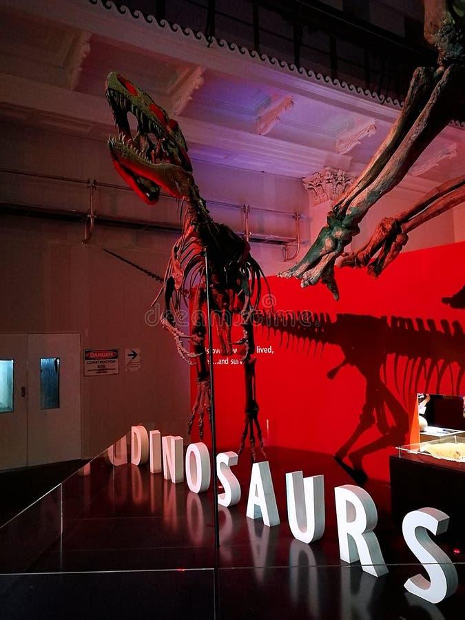 Museo nazionale dell'Australia dei fossili di dinosauri @ fotografie stock libere da diritti
