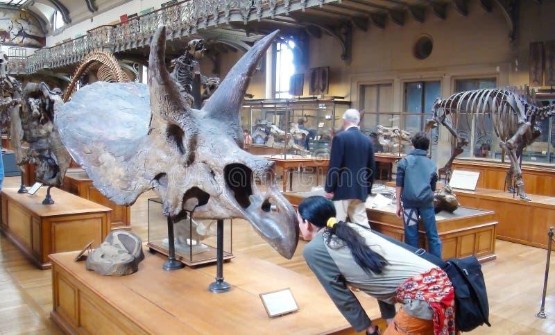Museo parisiense de la paleontología fotos de archivo