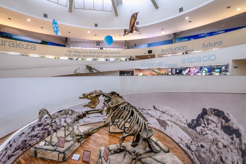 Museo Provinsiell de Ciencias Naturales för naturvetenskapmuseum inre - Cordoba, Argentina arkivfoto