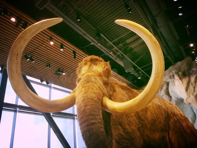 Museu Bell Mammoth imagens de stock