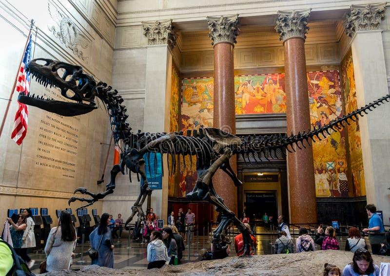 Museu de New York City de dinossauros das ciências naturais fotos de stock royalty free