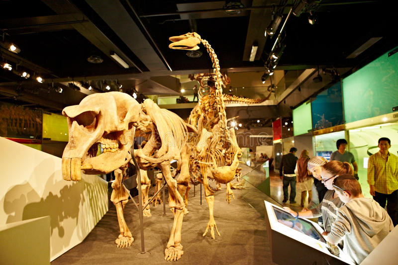 Download Museum editorial stock photo. Image of education, extinct - 26691488