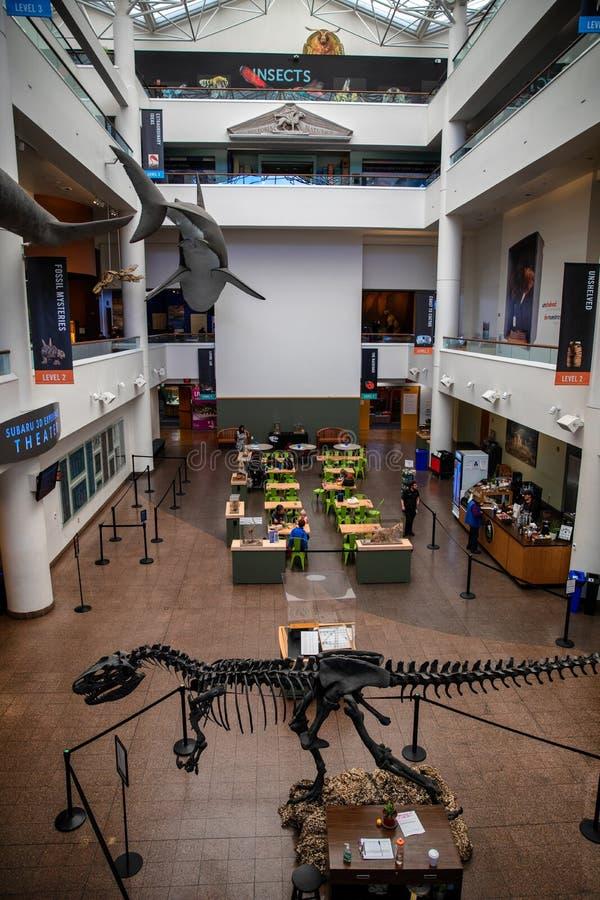 Museum för naturlig historia i San Diego fotografering för bildbyråer