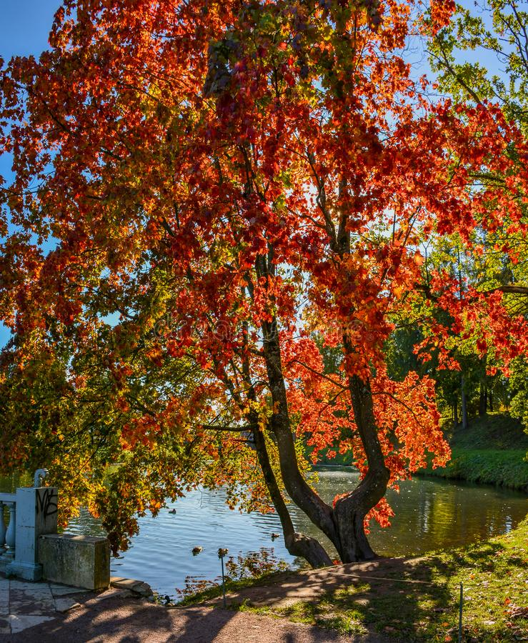 Sunny autumn day in the Park in Gatchina stock photos