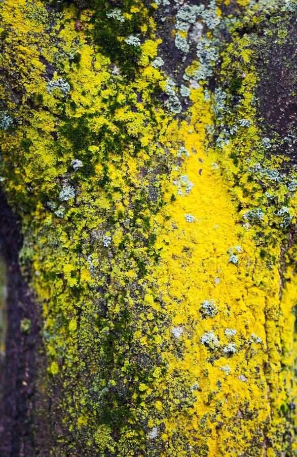 Musgo coloreado en árbol