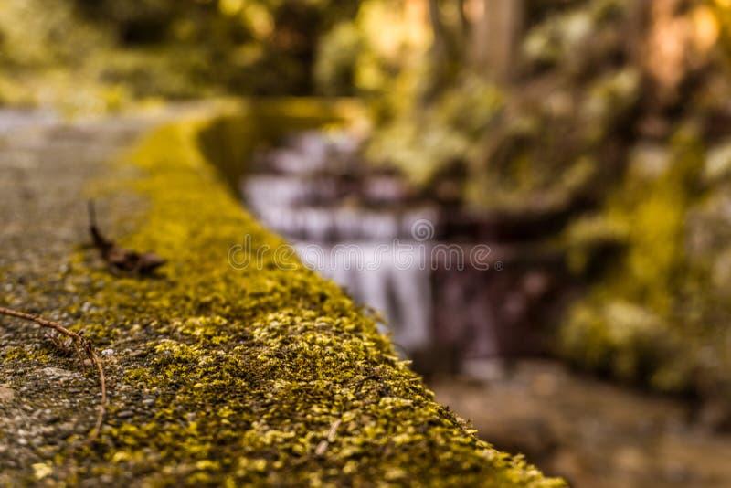 Musgo con un fondo y un agua verdes borrosos fotografía de archivo libre de regalías