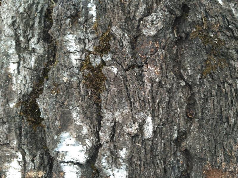 Musgo da natureza da árvore preto e branco foto de stock royalty free