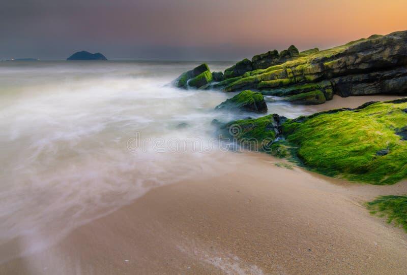 Musgo de mar verde en piedra imágenes de archivo libres de regalías