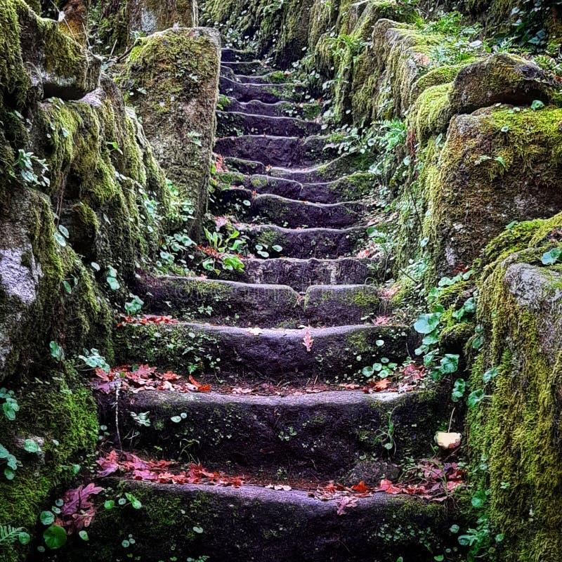 Musgo de pedra velho da floresta das escadas imagens de stock royalty free