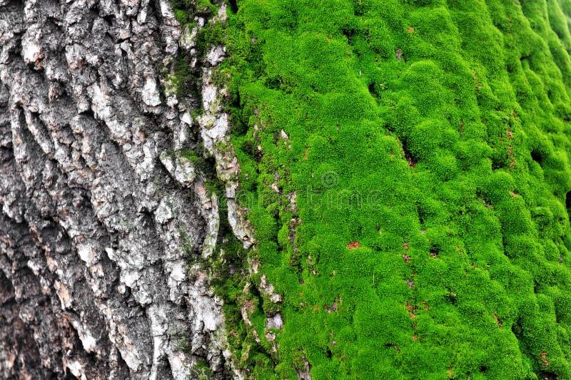 Musgo del árbol fotos de archivo libres de regalías
