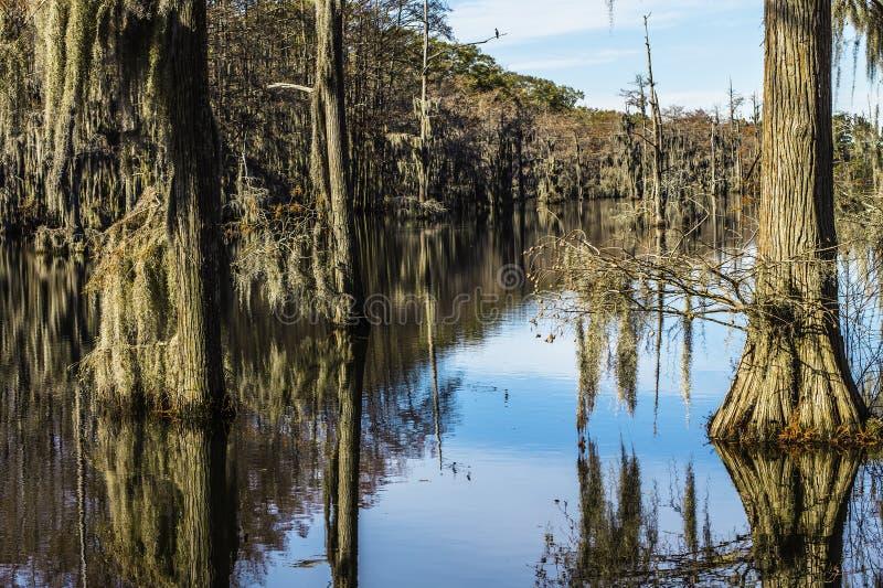 Musgo del árbol del pantano imágenes de archivo libres de regalías