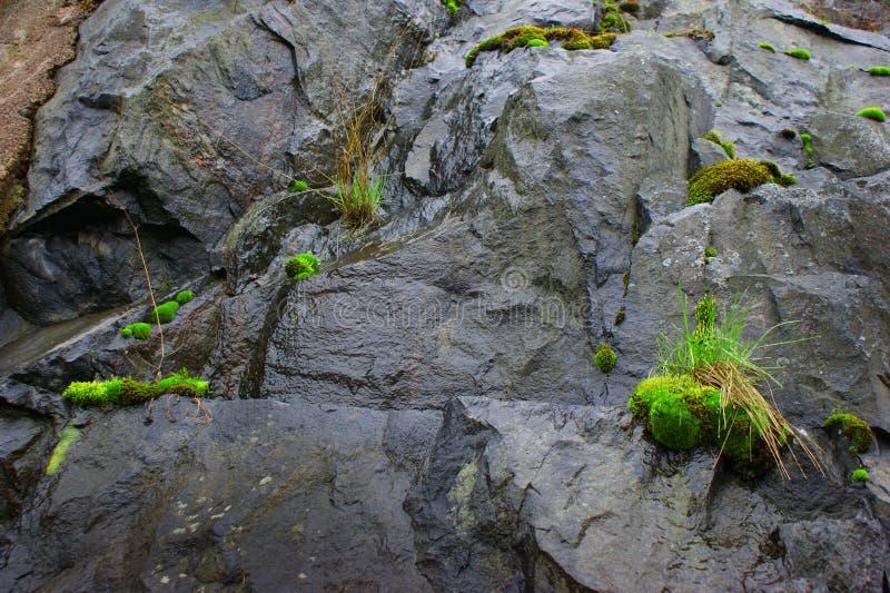Musgo e grama verdes em rochas molhadas fotografia de stock royalty free