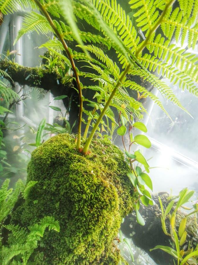 Musgo e samambaia verdes imagens de stock