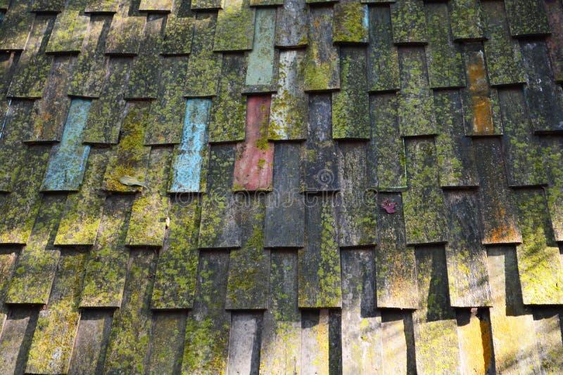Musgo en el tejado foto de archivo libre de regalías