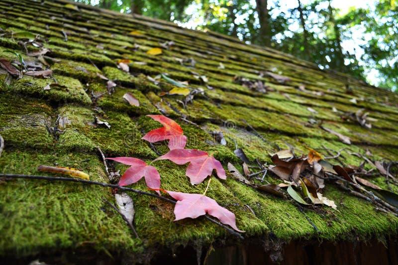 Musgo en el tejado y la hoja roja fotografía de archivo