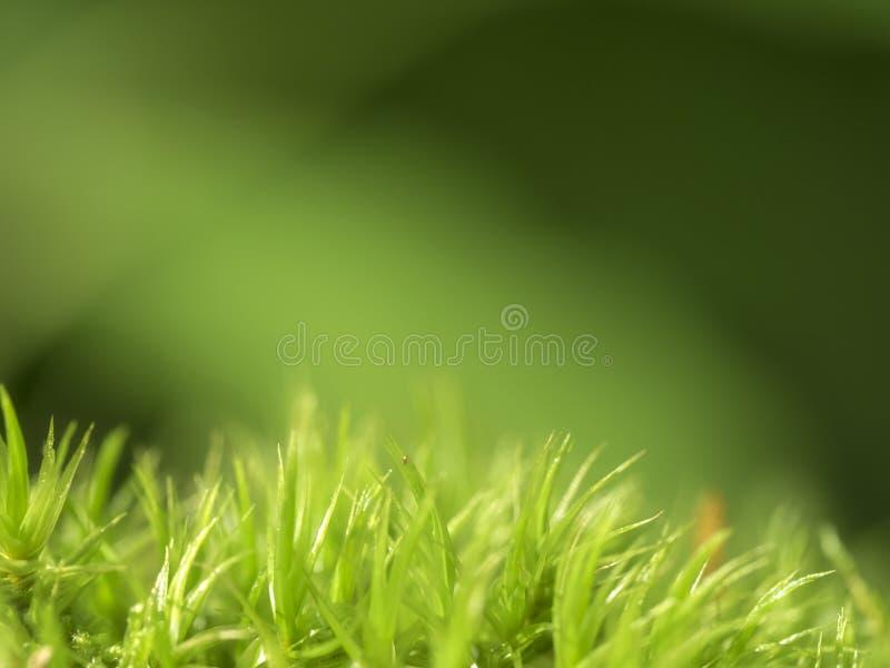 Musgo en fondo verde imagenes de archivo