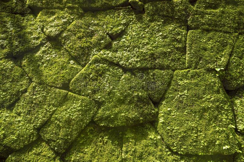 Musgo en la pared de la roca en templo viejo Bali, Indonesia imagen de archivo