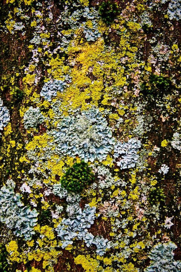 Musgo en la superficie del árbol foto de archivo libre de regalías