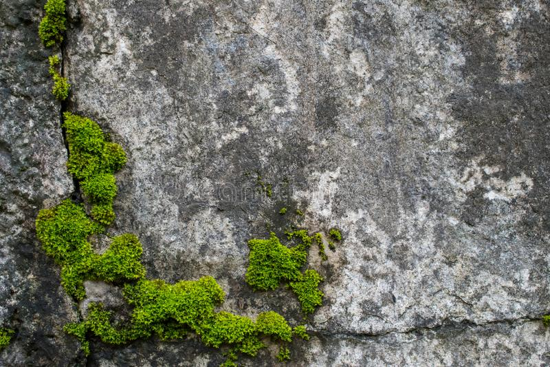 Musgo en las rocas travieso imágenes de archivo libres de regalías