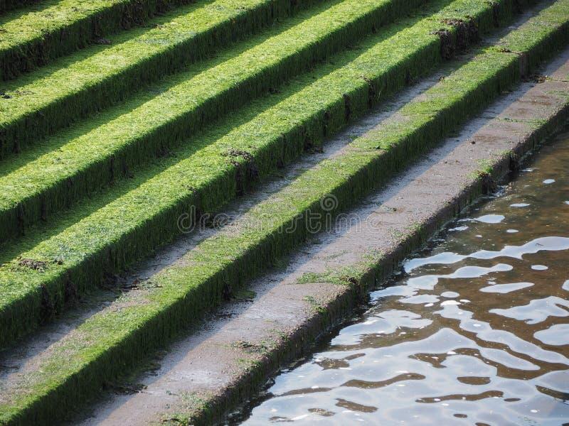 musgo en pasos concretos foto de archivo