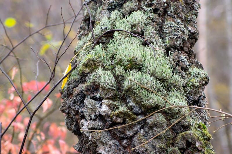 Musgo en tronco de árbol imagen de archivo