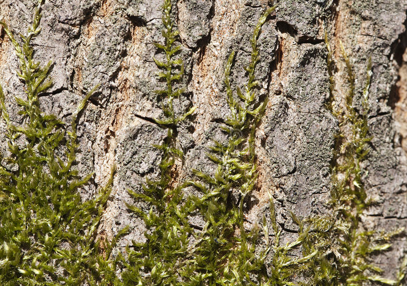 Musgo en un árbol imagen de archivo