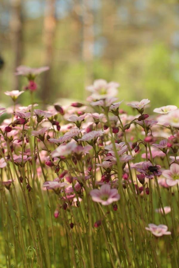 Musgo floreciente de las flores brillantes imagen de archivo