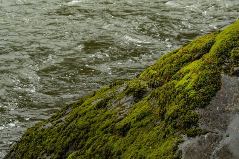 Musgo grueso en roca a lo largo del agua fotografía de archivo