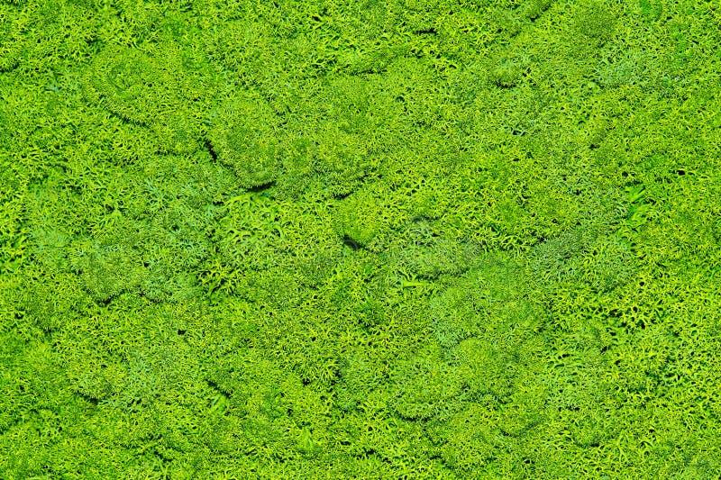 Musgo La textura del musgo imágenes de archivo libres de regalías