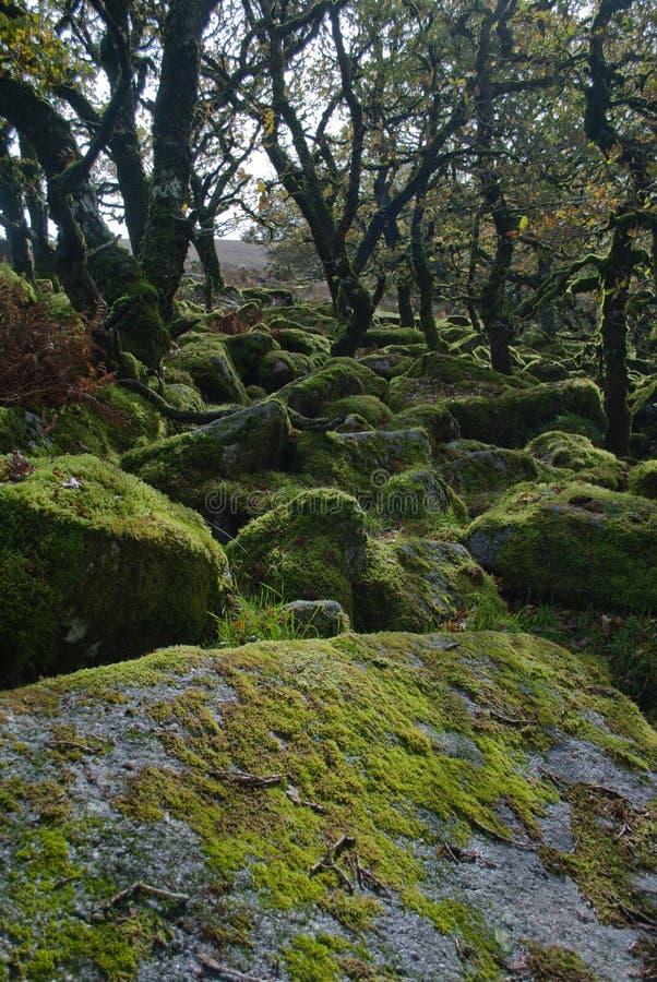 Musgo sobre rocas fotografía de archivo libre de regalías