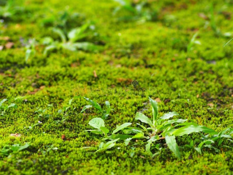 Musgo tropical verde fresco e grande grama das folhas fotografia de stock