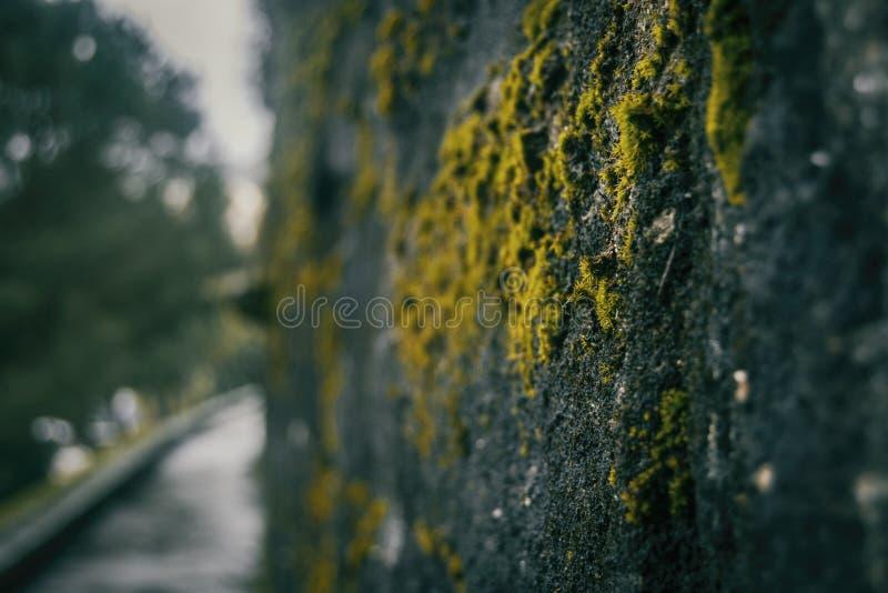 Musgo velho na parede do castelo de Galiza, spain fotos de stock royalty free