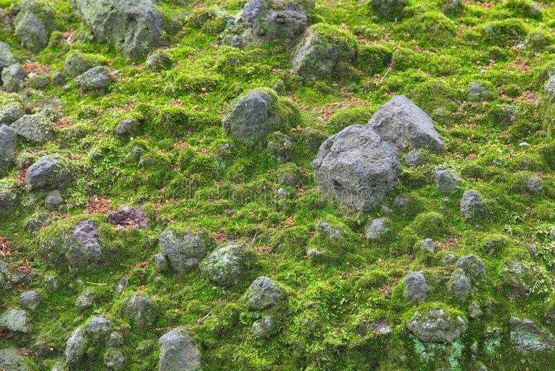 Download Musgo verde foto de archivo. Imagen de viejo, humedad - 41905114