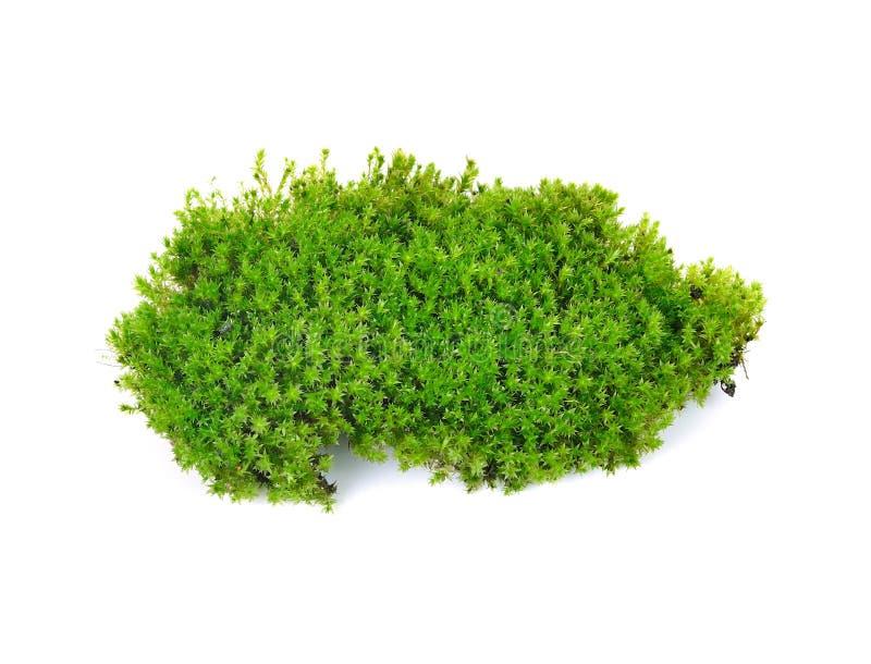 Musgo verde fotografia de stock royalty free