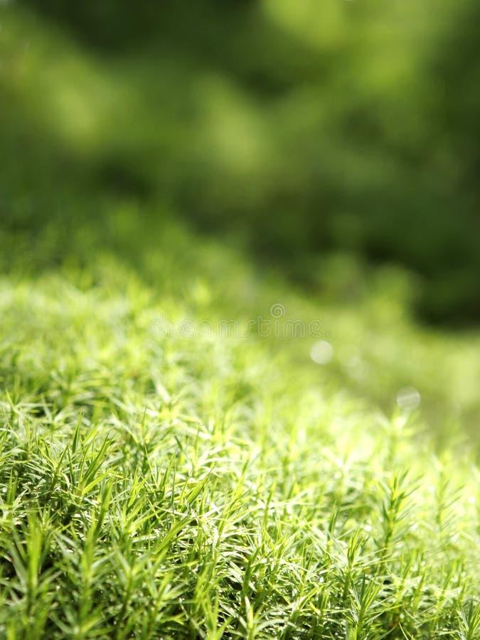 Musgo verde imágenes de archivo libres de regalías