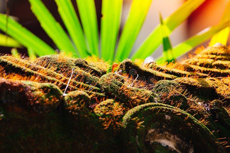 Musgo verde bonito no sunglight imagem de stock