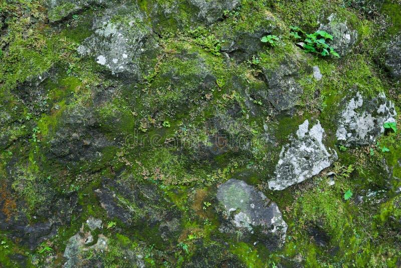 Musgo verde-claro na parede suja da rocha perto da cachoeira nas frentes fotos de stock
