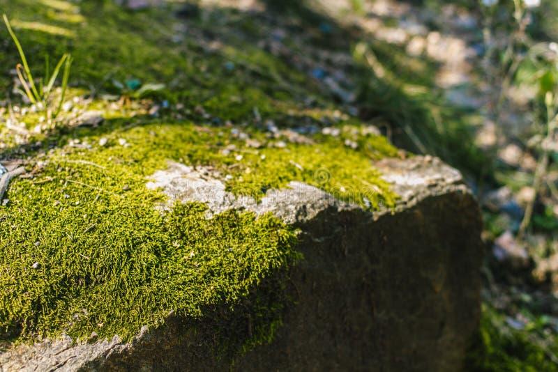 Musgo verde do verão fotos de stock royalty free