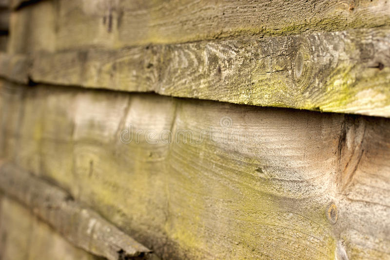 Musgo verde em uma cerca de madeira velha foto de stock royalty free