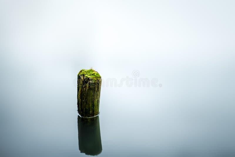 Musgo verde en árbol forestal imagen de archivo libre de regalías