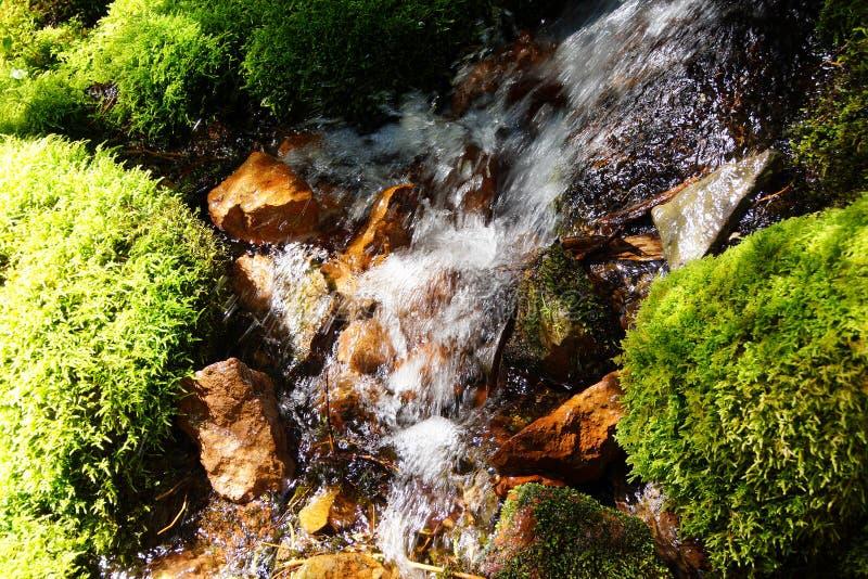 Musgo verde en corriente alpina fotografía de archivo