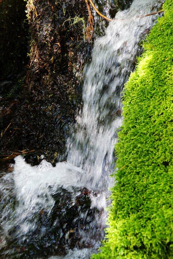 Musgo verde en corriente alpina foto de archivo