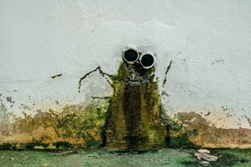Musgo verde en el muro de cemento blanco foto de archivo libre de regalías