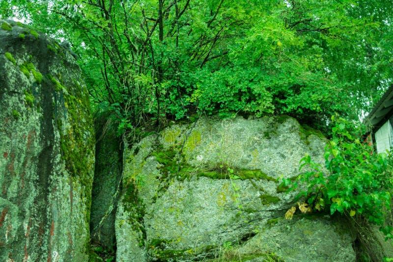 Musgo verde en los cantos rodados enormes fotografía de archivo