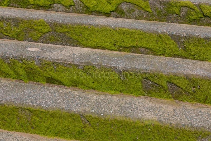 Musgo verde en pasos concretos en la playa Llandudo País de Gales del norte imagen de archivo