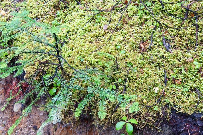 Musgo verde en roca gris fotos de archivo