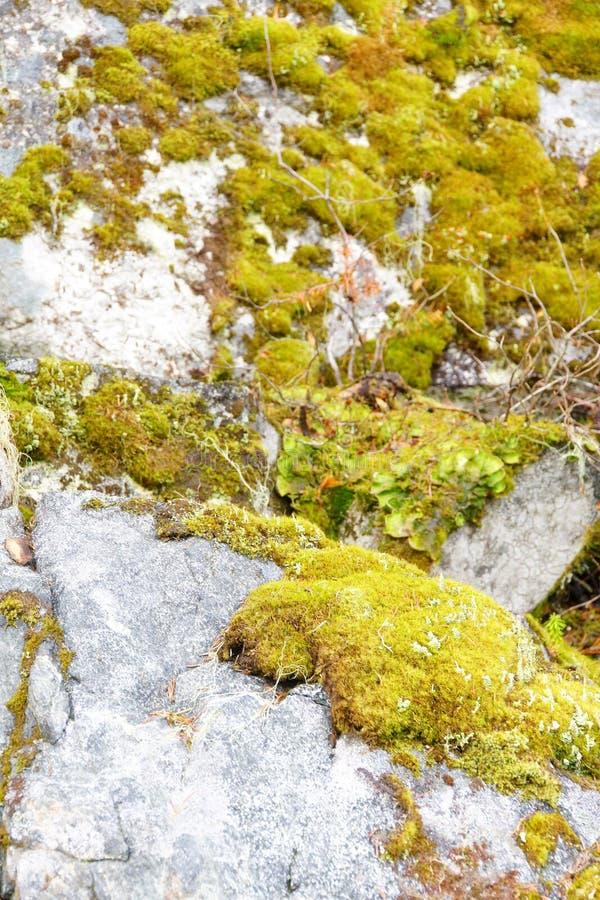 Musgo verde en roca gris imagenes de archivo