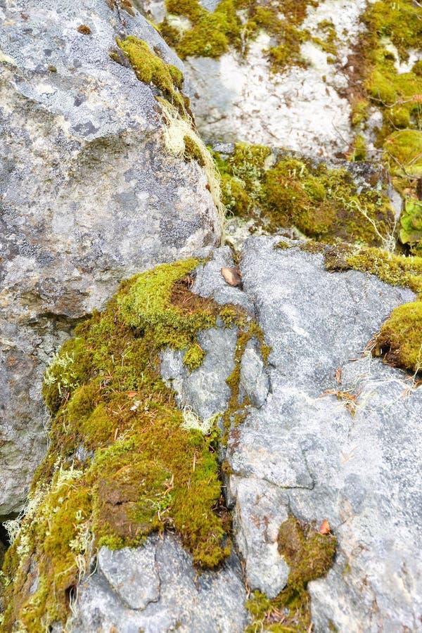 Musgo verde en roca gris foto de archivo