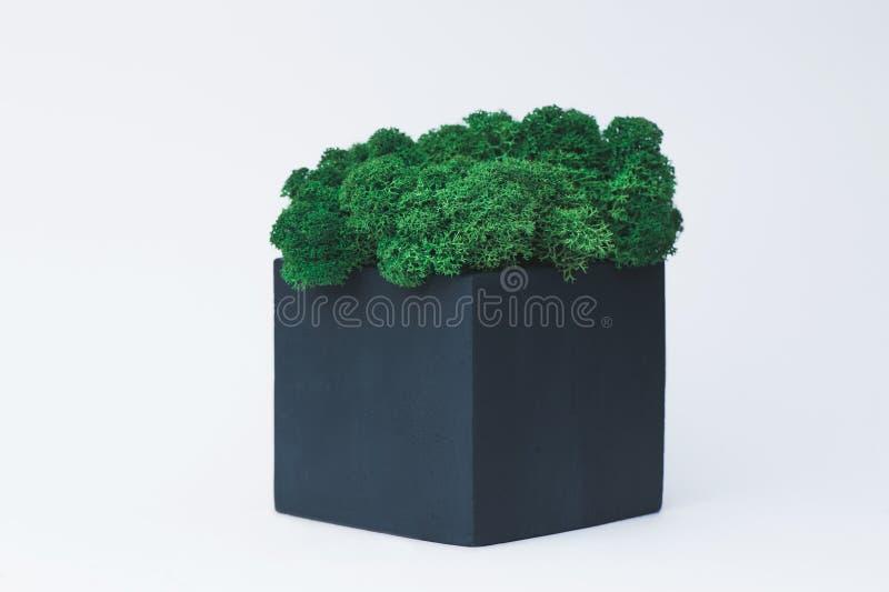 Musgo verde en un pote concreto en un fondo blanco para los diseñadores fotografía de archivo libre de regalías